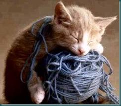 kitty-yarn